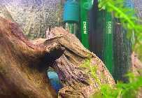 _Aquarium, Simone-0083.jpg