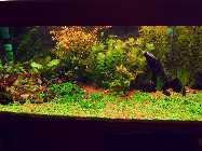 aquaforum 008.jpg