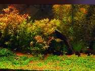 neues aqua 20.04.08 010.jpg